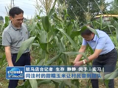 闫洼村的甜糯玉米让村民尝到甜头