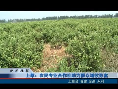上蔡:農民專業合作社助力群眾增收致富