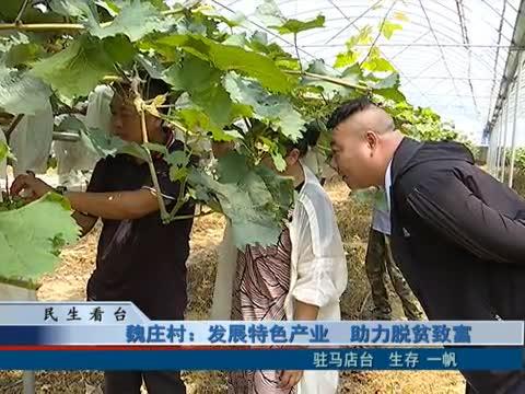 魏莊村:發展特色產業 助力脫貧致富