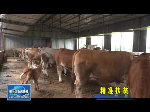 """任庄村:发展养殖业 走出致富""""牛路子"""""""