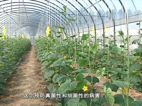 阴雨天气如何生产管理蔬菜