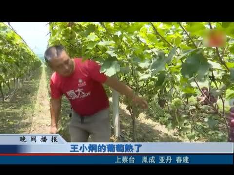 王小炯的葡萄成熟了