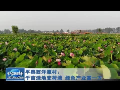 平舆西洋潭村:千亩洼地变荷塘 绿色产业富一方