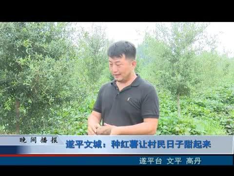 遂平文城:种红薯让村民日子甜起来