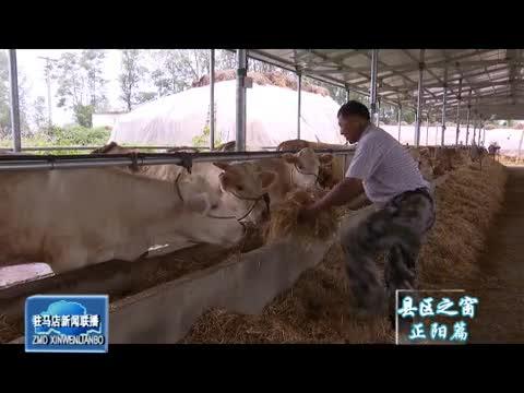 叶庙村:产业托起村民致富梦