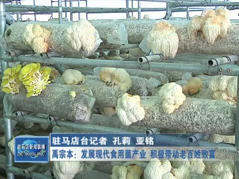 禹宗本:发展现代食用菌产业 积极带动老百姓致富