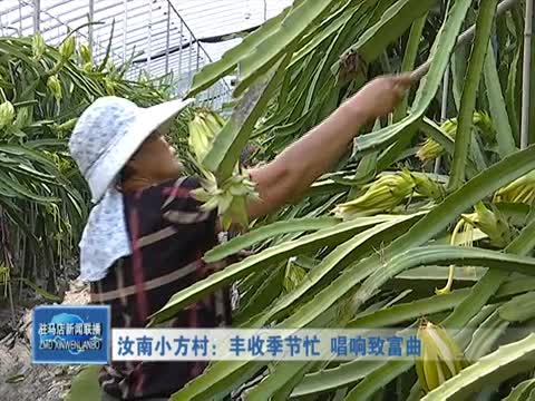 汝南小方村:丰收季节忙 唱响致富曲