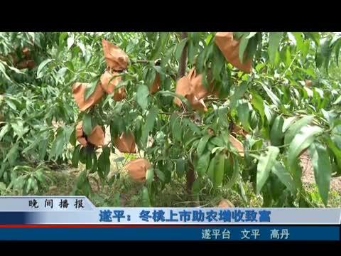 遂平:冬桃上市助农增收致富