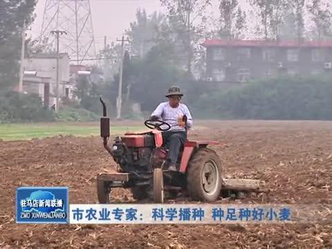 市农业专家:科学播种 种足种好小麦