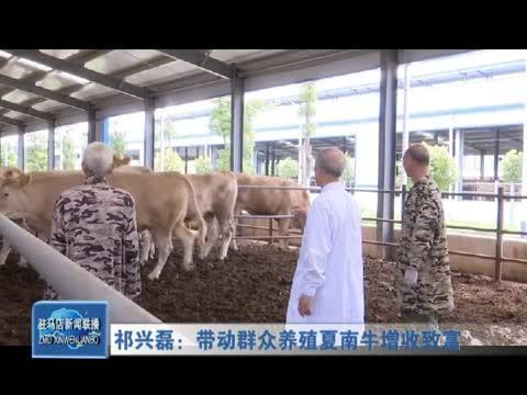 祁兴磊:带动群众养殖夏南牛增收致富