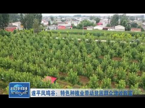 遂平凤鸣谷:特色种植业带动贫困群众增收致富