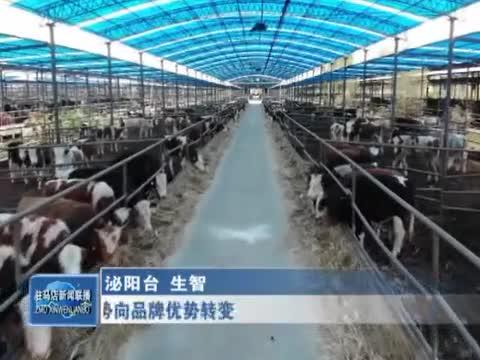泌阳:推动夏南牛品种优势向品牌优势转变