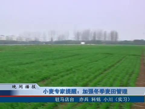 小麦专家提醒:加强冬季麦田管理