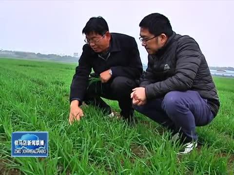 加强冬季麦田管理 为小麦丰产奠定良好基础