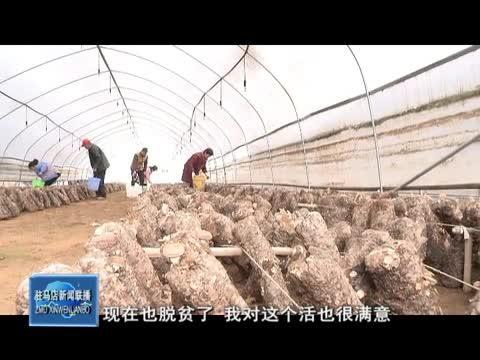 上蔡:产业助力扶贫 群众增收致富