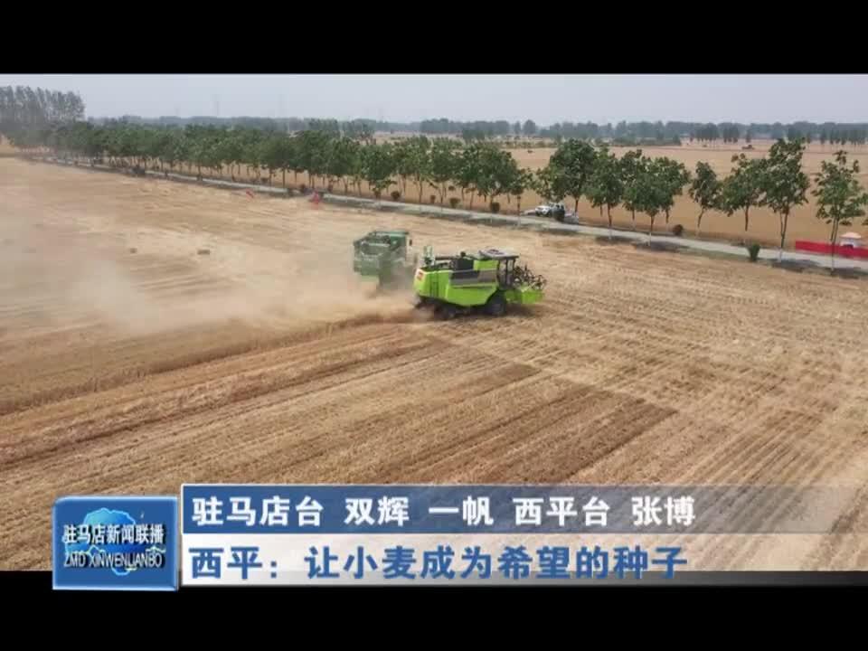 西平:让小麦成为希望的种子