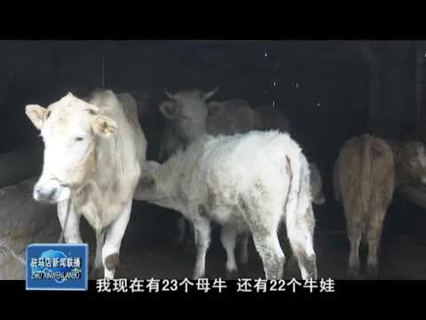 泌阳:夏南牛产业带动贫困户稳定增收