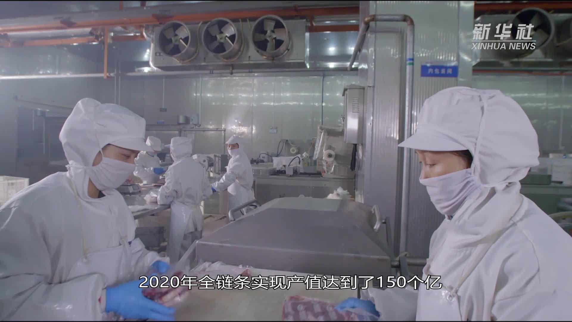河南泌阳:夏南牛拉动百亿产业