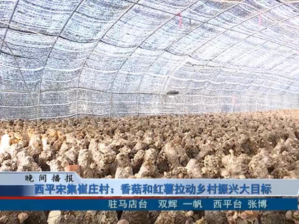 西平宋集崔庄村:香菇和红薯拉动乡村振兴大目标