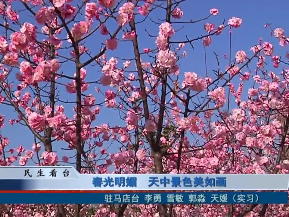 春光明媚 天中景色美如画