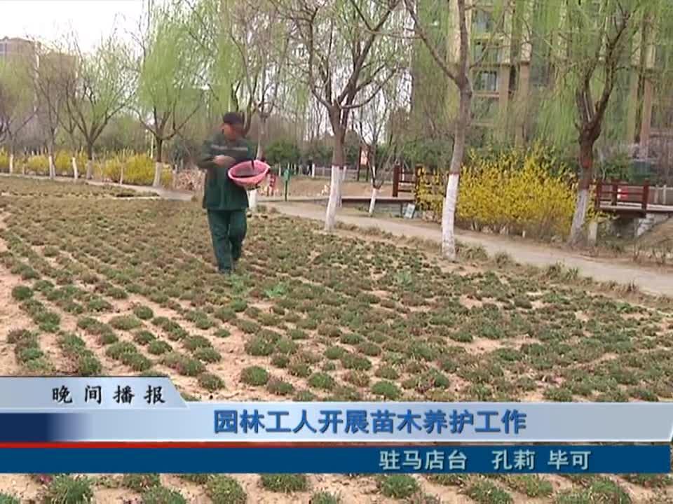 园林工人开展苗木养护工作