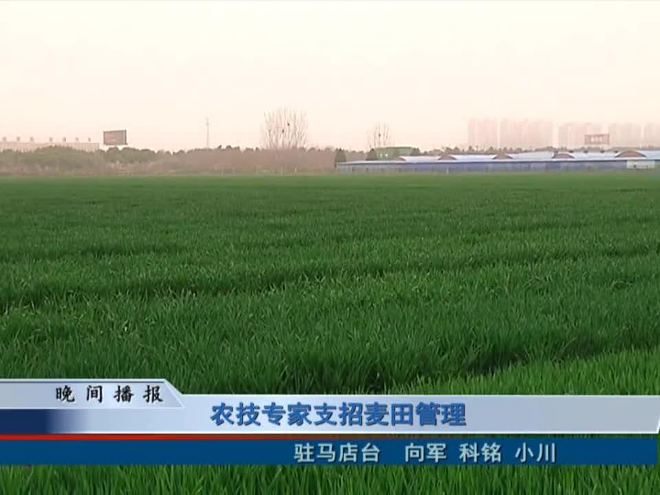 农技专家支招麦田管理
