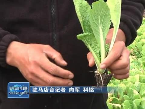 """汝南""""农小伙"""":发展无公害农业 打造有机蔬菜品牌"""