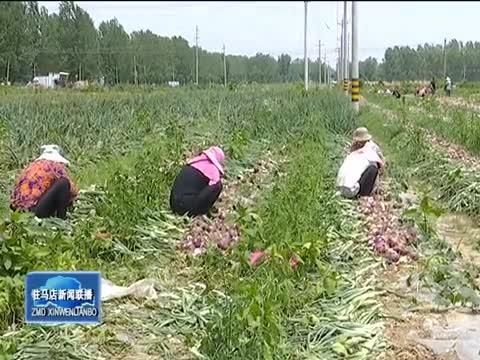驻马店市6个农产品上榜全国名特优新农产品名录公示