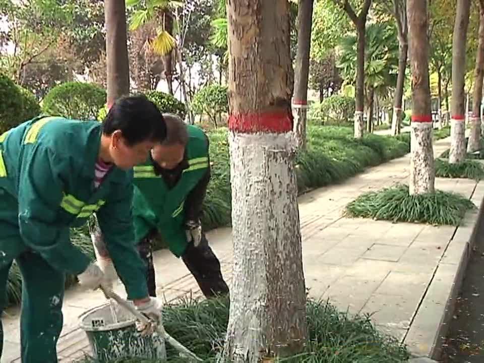 驻马店市园林绿化中心:加强冬季苗木护养管理 保障城市绿化景观效果