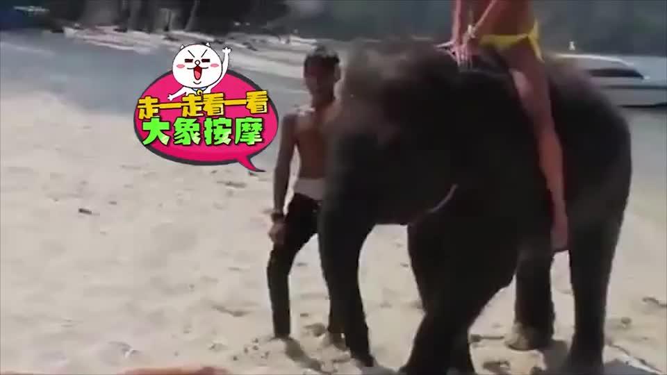 《不正经 海豚偷袭比基尼美女》