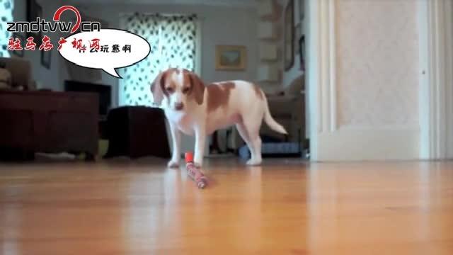 《狗雄救美大战玩具蛇》
